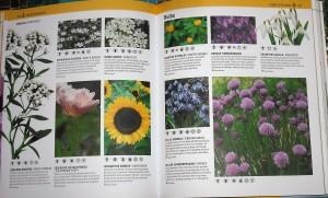 Page describing bulbs for bees